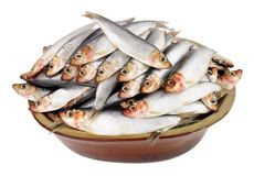 Rustic Dish Filled With Fresh Raw Fish. Sprats isolated on a white background Stock Images