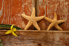 Rustic door. Small starfish and flower resting on the edge of a barn door royalty free stock images