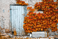 Rustic door Royalty Free Stock Photos