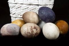 Rustic Dyed Easter Eggs with White Basket Royalty Free Stock Image
