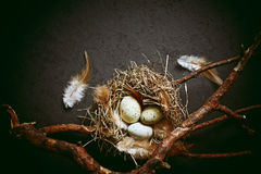 Rustic Easter arrangement of branches, eggs and feathers Stock Photos