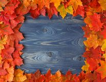 Rustic Fall Decoration Display of Maple Leaves Frame Stock Photography