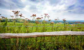 Rustic fence enclosing meadow Stock Image
