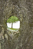 Rustic Fence With Knothole Stock Images