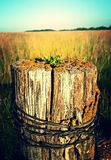 Rustic Fence Post. A Rustic Post with lucious fields in the background and shades of gold and yellow attract the eyes to the center of this stunning and colorful Stock Image