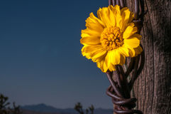 Rustic Fence Post With Wildflowers Royalty Free Stock Image