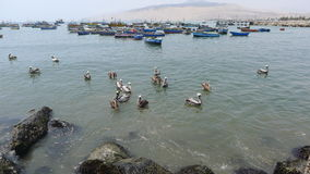 Rustic fishing boats and pelicans in Ancon Stock Photos