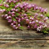 Rustic flower, macro Stock Photography