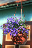 Rustic flower pot Royalty Free Stock Photography