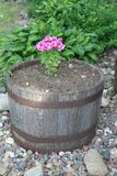 Rustic Flower Pot with Pink and White Flowers royalty free stock photos