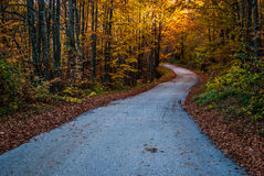Rustic forest lane in autumn Royalty Free Stock Photography