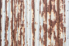 Rustic galvanized sheet wall with nail Stock Images