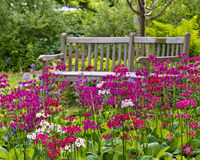 Rustic garden bench Stock Photo