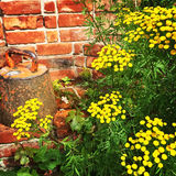 Rustic garden with brick wall and wild flowers Stock Photography