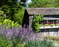 Rustic garden shed with flower boxes. Late spring garden scene with rustic garden shed and flower boxes Royalty Free Stock Photography