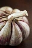 Rustic garlic. Closeup of a rustic fresh garlic bulb with its skin still on royalty free stock photo