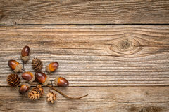 Rustic grained wood with fall decoration Stock Images