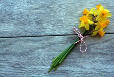 Yellow daffodil flowrs tied up with red and white string on a gray rustic background. Rustic gray background with fresh yellow daffodil flowers tied up with red stock image