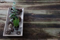 Rustic green succulent plants on retro wooden table, copy space Royalty Free Stock Photo