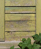 Rustic green wooden texture with copy space with frame of natural herbal climbing plant in the sunshine Royalty Free Stock Photography