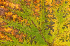 Rustic green and yellow leaf Royalty Free Stock Photos
