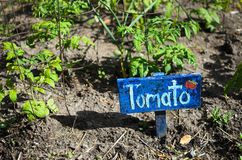 Rustic hand-made painted wooden Tomato sign next to young tomato. Plants Stock Photo
