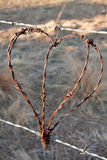 Rustic heart. From barbed wire hanging from fence outdoor in natural light Stock Image