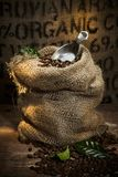 Rustic hessian sack with roasted coffee beans. Rustic hessian sack filled with roasted coffee beans with a metal scoop and background organic text on burlap royalty free stock image