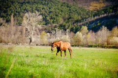 Rustic horse in the field Stock Photo