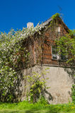Rustic house covered by flowers under blue sky. Rustic wooden house covered by flowers under blue sky Royalty Free Stock Photo
