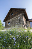 Rustic house with wild flowers in front. Old rustic cottage made of oak, with blue wild flowers growing in front of it Stock Photos