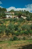 Rustic houses on hill with terraced olive trees royalty free stock photos