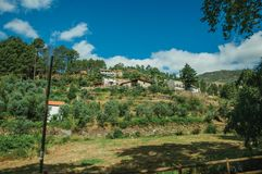 Rustic houses on hill with terraced olive trees royalty free stock images