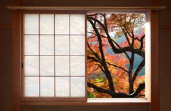 Simple Japanese wood frame window with a nice view of autumn maple leaves stock photography