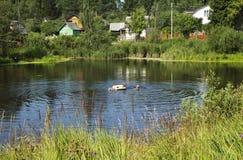Rustic lake. Royalty Free Stock Image