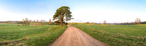 Rustic landscape with lonely pine and windmill on horizon Royalty Free Stock Images