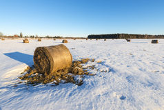 Rustic landscape with wintry field and haystacks Royalty Free Stock Images