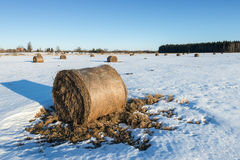 Rustic landscape with wintry field and haystacks Stock Photography