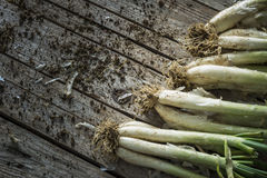 Rustic Leek Royalty Free Stock Photography