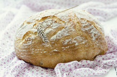 Rustic loaf of bread Stock Image