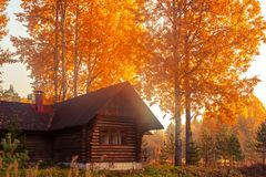 Rustic log house surrounded by autumn trees at sunrise on a foggy morning. Beautiful rural landscape stock photos