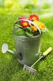 Rustic metal watering can with flowers Stock Photo
