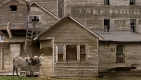 Rustic Mill. A rustic picture of an old mule standing in front of the old flour mill at Ronan, Montana Royalty Free Stock Image