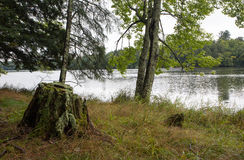 Rustic northern Wisconsin lake. A northern Wisconsin lake with tree stump in the foreground stock photo