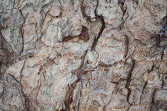 Rustic oak tree bark closeup texture photo. Rustic tree trunk closeup Royalty Free Stock Images