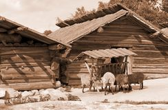 Rustic old log farm buildings Royalty Free Stock Image
