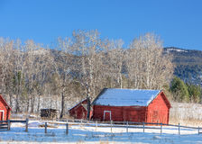 Rustic old red shed in winter on a farm Royalty Free Stock Images