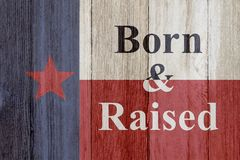 A rustic old Texas message. Texas flag on weathered wood background with text Born and Raised royalty free stock image