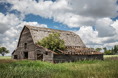 Rustic old wooden barn showing signs of sagging. Horizontal image of an old abandoned brown wooden barn with a tree growing out of a part of the caved in roof Stock Images