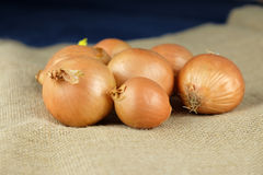Rustic onion on burlap. Rustic onions on a burlap cloth Royalty Free Stock Images